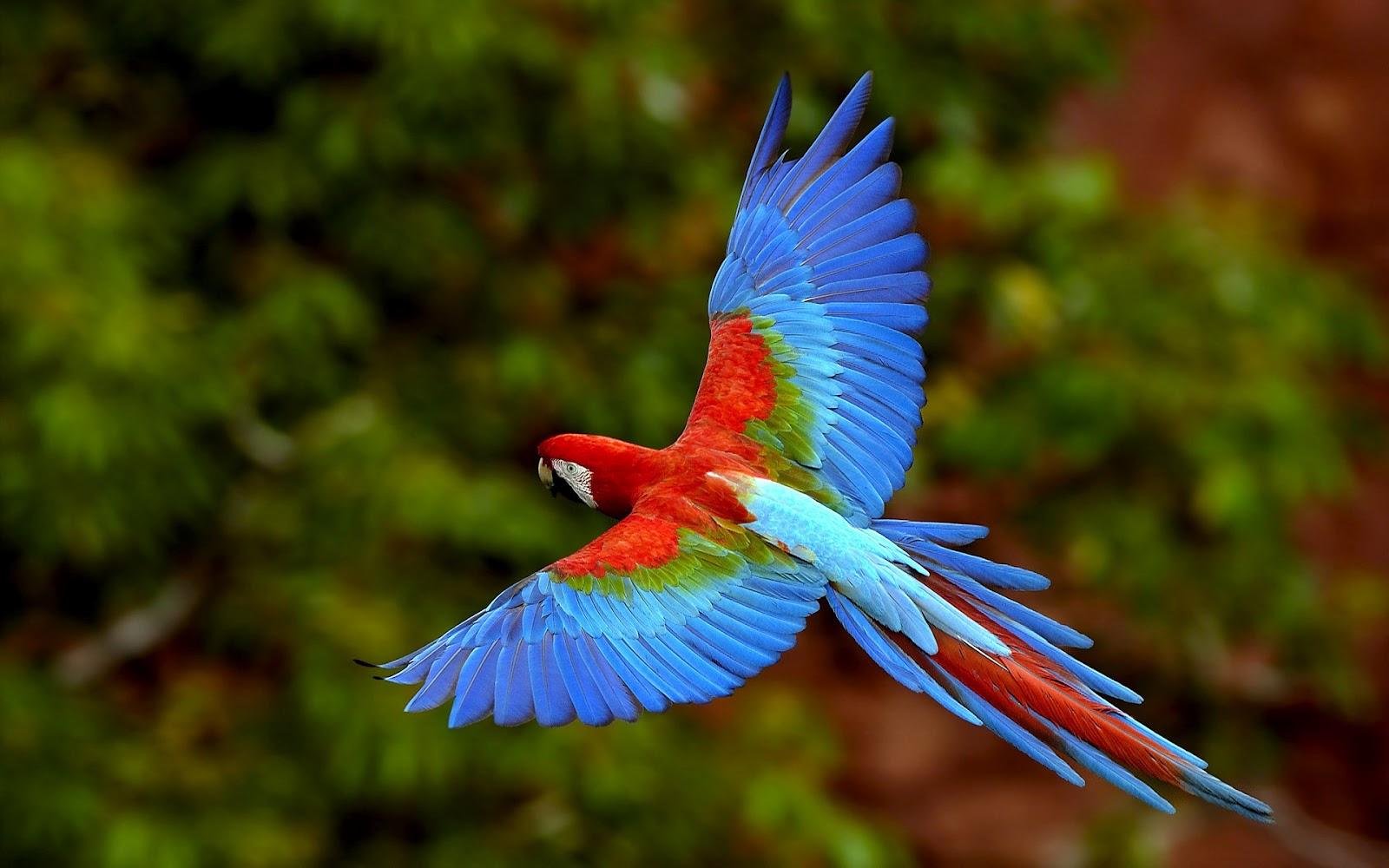 Parrot wallpaper 2012 00