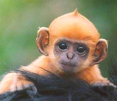 colorful headed baby monkey